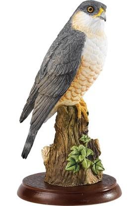 Border Fine Arts Sparrow Hawk Biblo