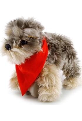 My Puppy Parade Yürüyen Köpeğim Tanner