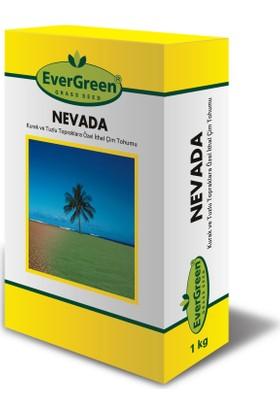 Evergreen Nevada Sıcak İklim İçin Çim Tohumu 1 kg Kutu