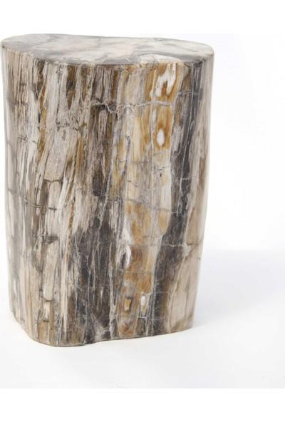Fosil Kütük 28x40 cm