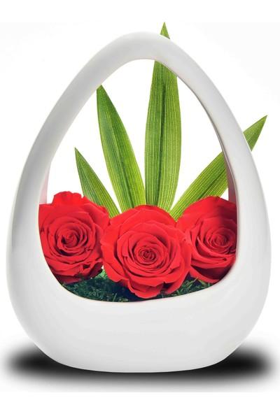 Mutlubi Solmayan Kırmızı Güller