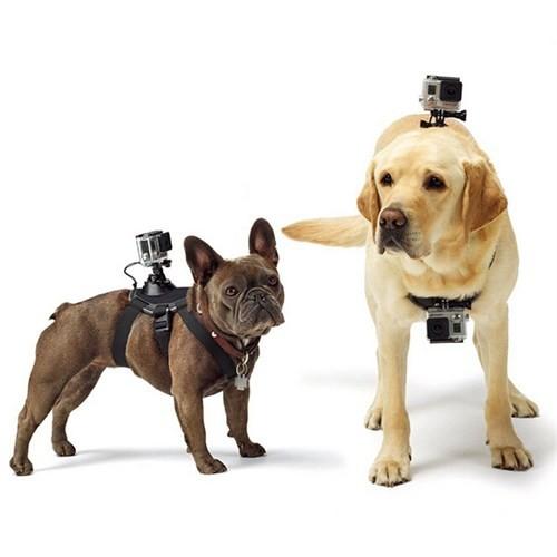 Knmaster Sjcam Köpek Askısı Dog Chesty