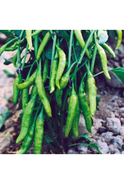 Akran Tarım Doğal Acı Aşağı Bakan Süs Biberi Tohumu 5 gr