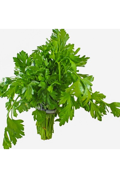 Akran Tarım Maydanoz Tohumu Italyan Geniş Yapraklı Maydanoz 300'lü Tohum