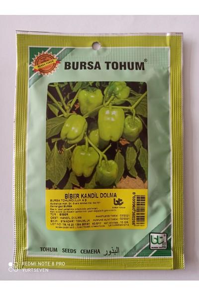 DÖRTBUDAK Bursa Kandil Dolma Biber Tohumu 10 gr