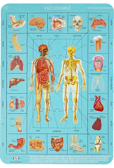 Tes Vücudumuzu Tanıyalım Puzzle 35 Parça 28 x 40 cm