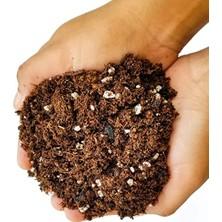 Tunç Botanik Defne Ekim Seti Tohum Toprak Saksı Bitki Besini
