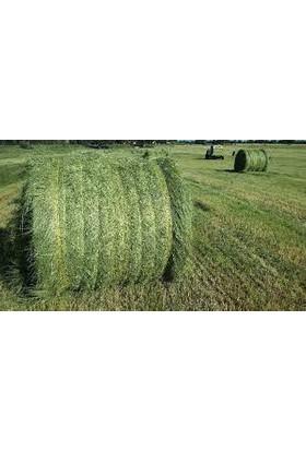 Agrobazaar Teff Grass Yazlık Sığır Otu Tohumu 1 kg