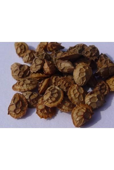 Agrobazaar Korunga Tohumu Yem Bitkisi 5 kg