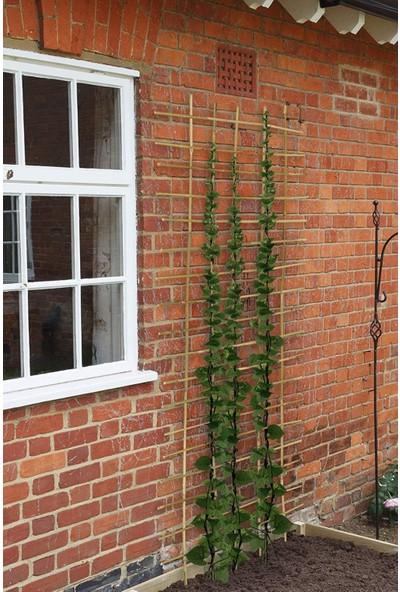 Bibliobambu Çubukları Bitki Destek Çubuğu 10'lu 100 cm