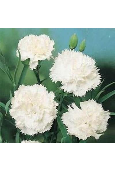 Agrobazaar Beyaz Iri Karanfil Tohumu