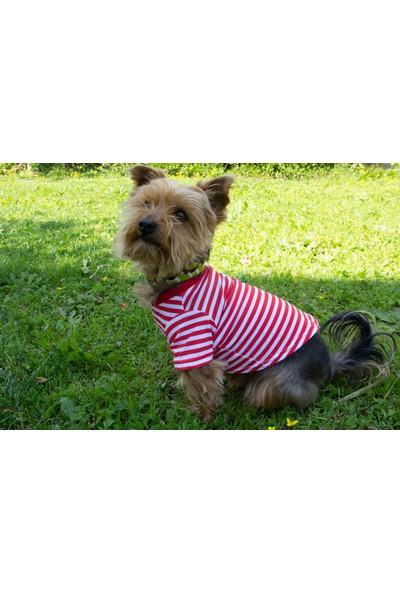 Ol And Lui Red Stripes Köpek Tişörtü