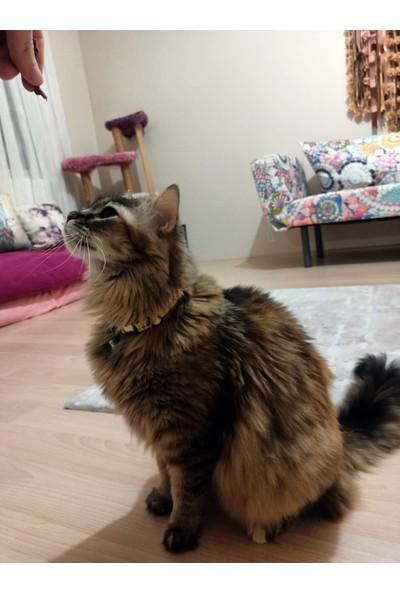 Avokado Desenli, Zilli ve Metal Aksesuarlı Ayarlanabilir Kedi Boyun Tasması - Sarı