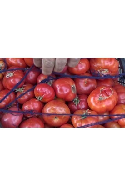 Agrobazaar Atalık Beji Domatesi Susuz Yetişen Domates Tohumu 10 Adet Tohum