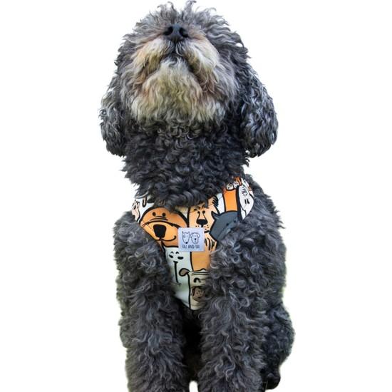 Oli And Lui Orange Köpek Gövde Tasması