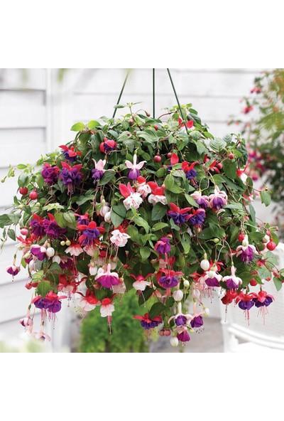 Agrobazaar Küpe Çiçeği Tohumu 50 Tohum