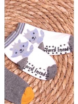 Breeze Erkek Bebek Soket Çorap 2 Li Abs Li Rakun Desenli Karışık Renk (6 Ay-2 Yaş)