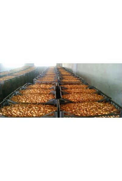 Agrobazaar Kıska Soğan Arpacık Soğanı Iska Soğan Tohumu 2 kg
