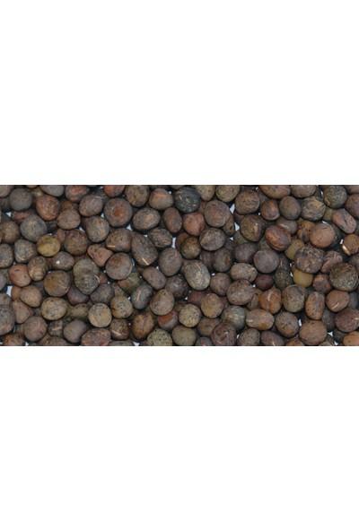 Agrobazaar Tritikale Tohumu 25 kg Yem Bitkisi Tohumu
