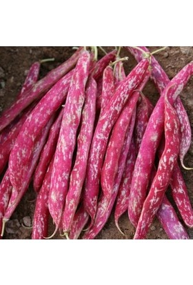 Bursa Tohum Bt 97 Barbunya Tohumu Sırık - 1kg