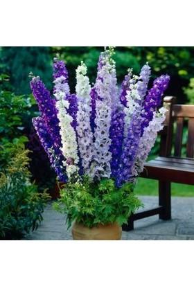 Agrobazaar Hezaren Çiçeği Tohumu 30 Adet Tohum