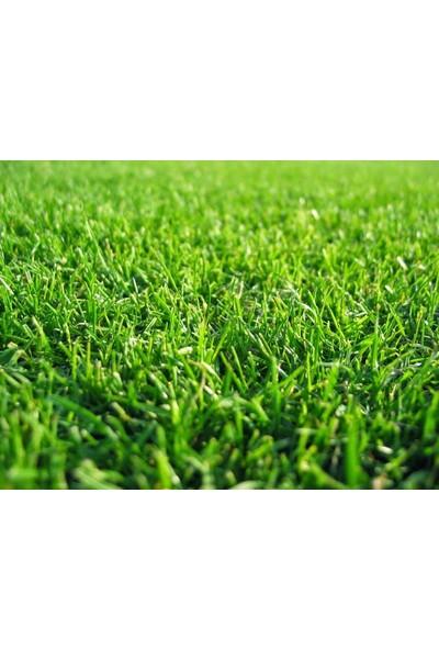 Agrobazaar Grass Mixture 4 M 4 Lü Karışım Çim Tohumu 10 kg