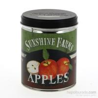 Sunshine Farms Teneke Mum