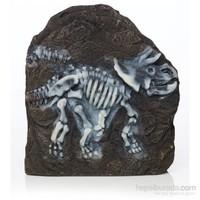 Hagen Marina Dekoratif Fosil Triceratop