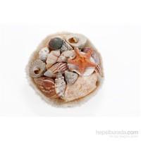 Akvaryum Dekor Karışık Deniz Kabukları Sepet