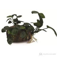 Dekor Bitkili Fıçı (12,5x9x8,5)
