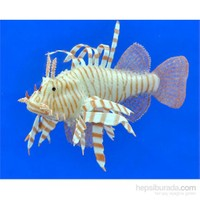 Süs Balık - Lion Fish