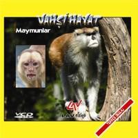 Maymunlar (Vahşi Hayat)
