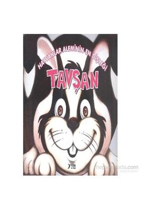 Hayvanlar Alemi Serisi-Hayvanlar Aleminin En Dişleği Tavşan