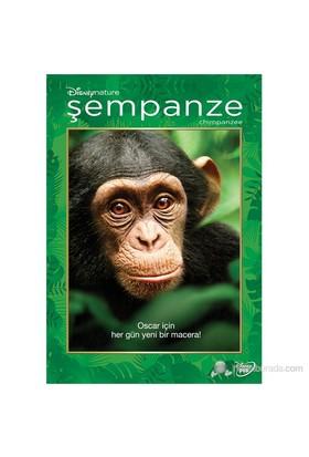 Chimpanzee (Şempanze) (DVD)
