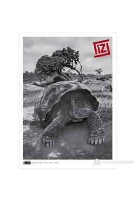 İz Dergisi Sayı: 46-Kolektif