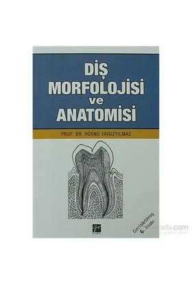 Diş Morfolojisi ve Anatomisi - Hüsnü Yavuz Yılmaz