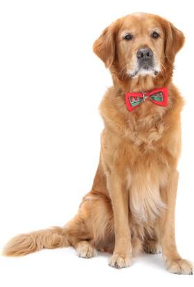 Dogi& Dog Yeni Yıl Köpek & Kedi Papyonları-Köpek Kiyafeti-Köpek Elbisesi-Kedi Kiyafeti-Kedi Elbisesi