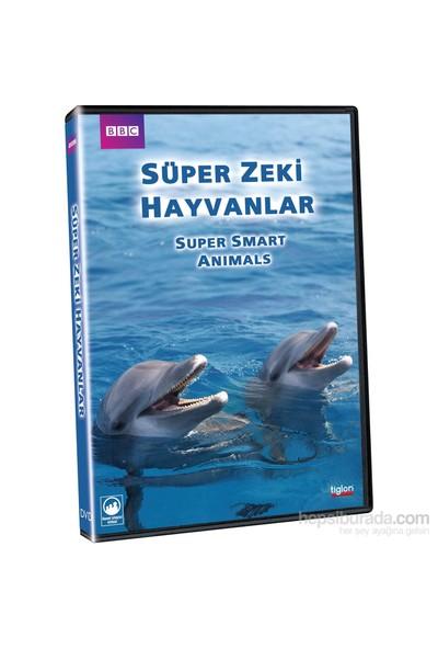 Super Smart Animals (Süper Zeki Hayvanlar) (DVD)