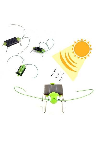 Bluezen Güneş Enerjisiyle Çalışan Solar Robot Böcek