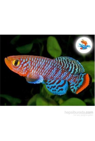 CGC Sihirli Balık - Canlı Balık Yetiştirme Kiti