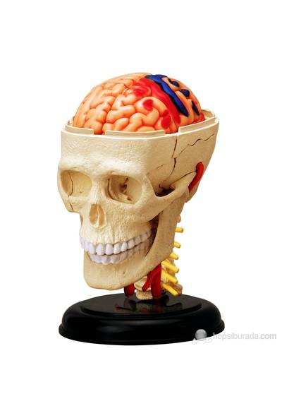 İnsan Anatomisi Puzzle - Beyin Sinirsel Sistemi ve Kafatası Modeli Yapbozu