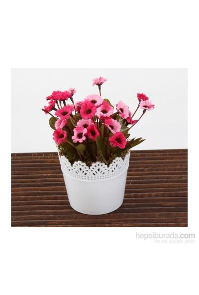 Mary Case Saksılı Yapay Çiçek 649D Papatya Fuşya-Pembe