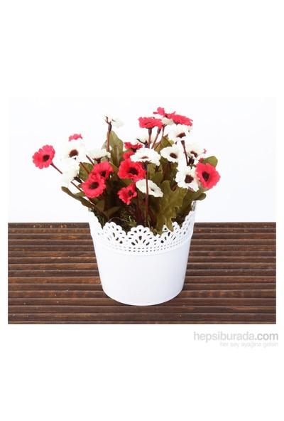 Mary Case Saksılı Yapay Çiçek 649D Papatya Kırmızı-Beyaz