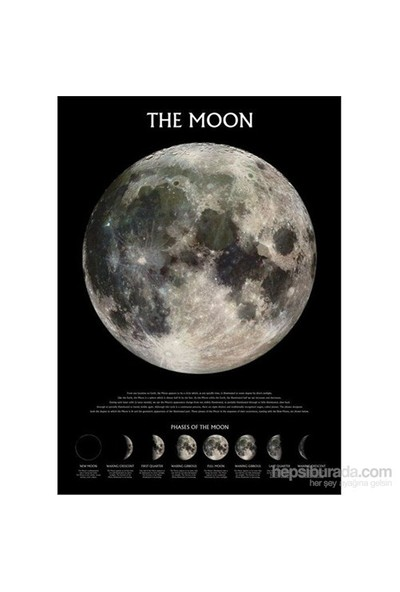 Maxi Poster The Moon Phases