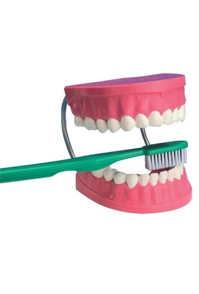 Eduscience Diş Fırçalama