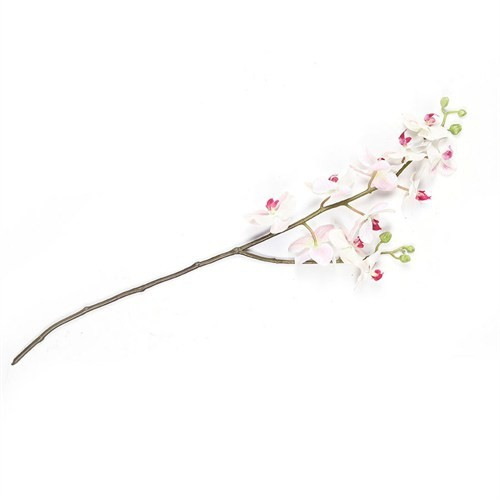 Altıncı Cadde Tekdal Orkide (Pink)