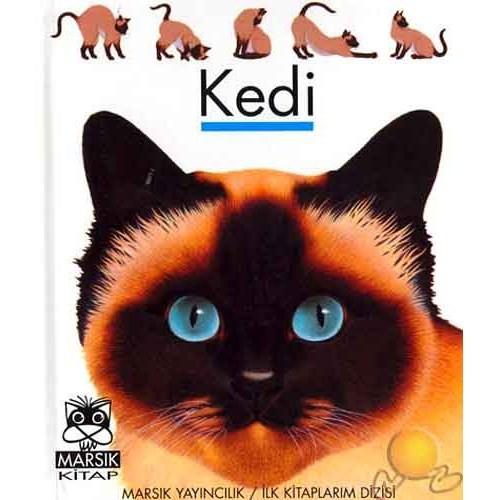Kedi ( Le Chat )