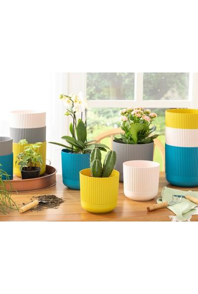 English Home Bloom Plastik Saksı 14X14X13 cm Antrasit