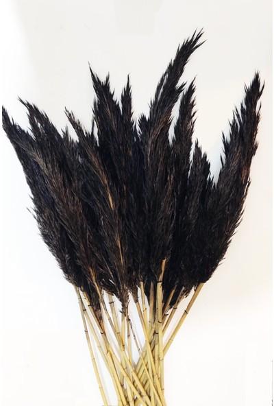 Eçiçek Şoklanmış Pampas Otu Siyah Renk 13'lü Demet