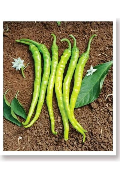Agrodal Tarım Ata Tohumu Yöresel Sivri Biber Acı Ilıca 1000 Adet Tohum
